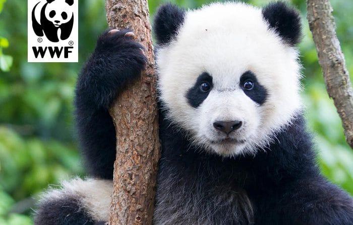 Get translation tools and save pandas.